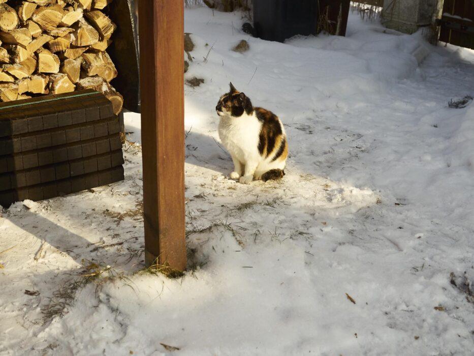 Schnee mag Sie ja nicht so aber SONNE!