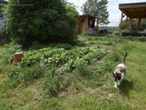 Grauenhaftes Aprilwetter im Mai in Brandenburg at Dakota Home