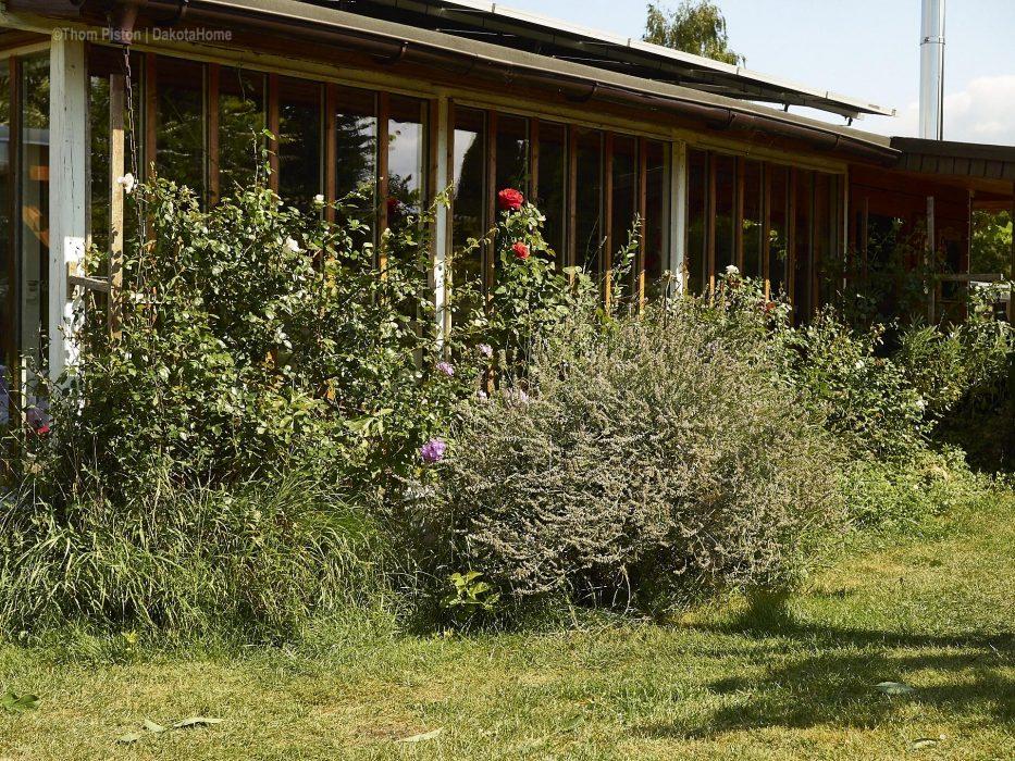 Lavendel im Garten