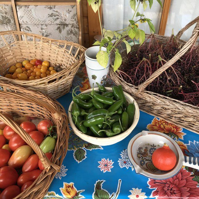 Jalapeno, Tomaten und der grösste Kürbis der WElt