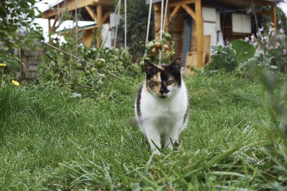 unsere liebe Fratze die Katze
