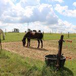 paardjes op de wei
