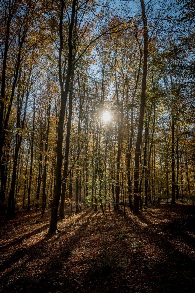 Wald im Herbst, die Sonne scheint durch die Bäume, Friedwald Luetzelhausen