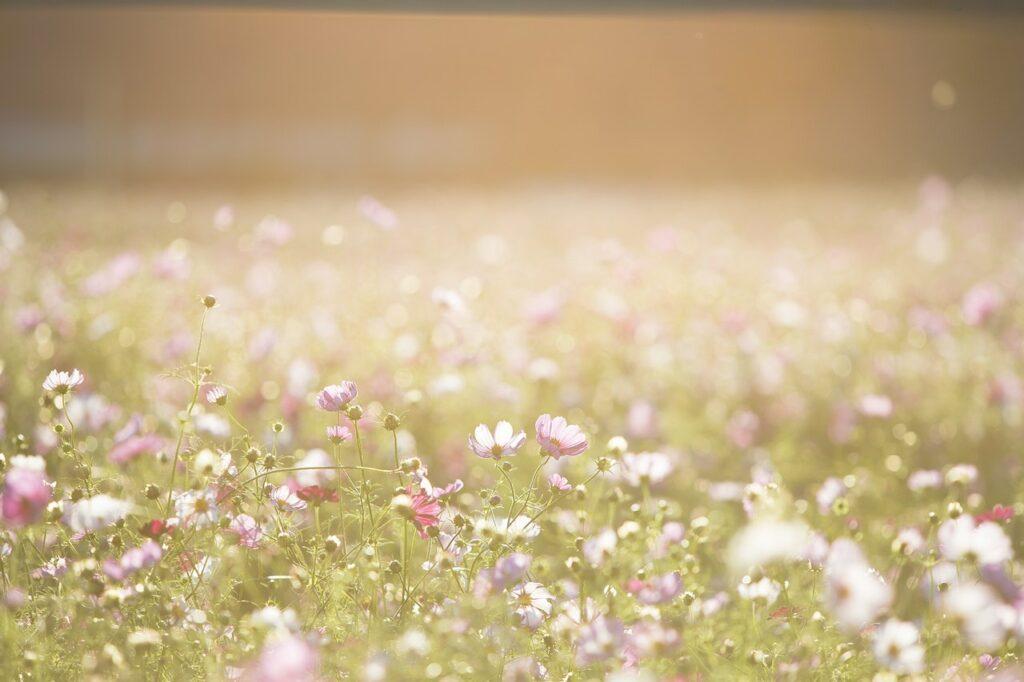 Sun hazy field of flowers, Testimonials from my Celebrancy clients.