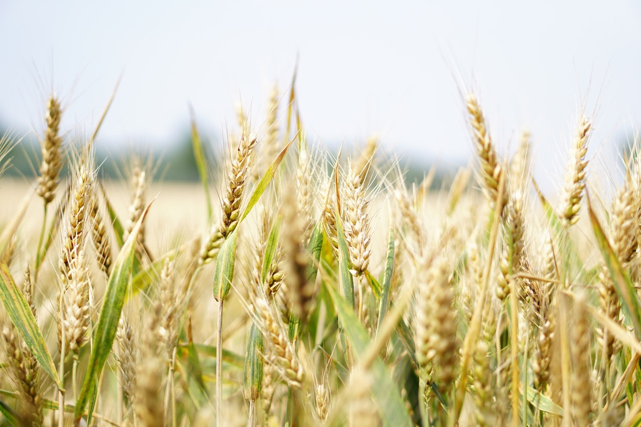Golden field of crops, Testimonials from my Celebrancy clients.