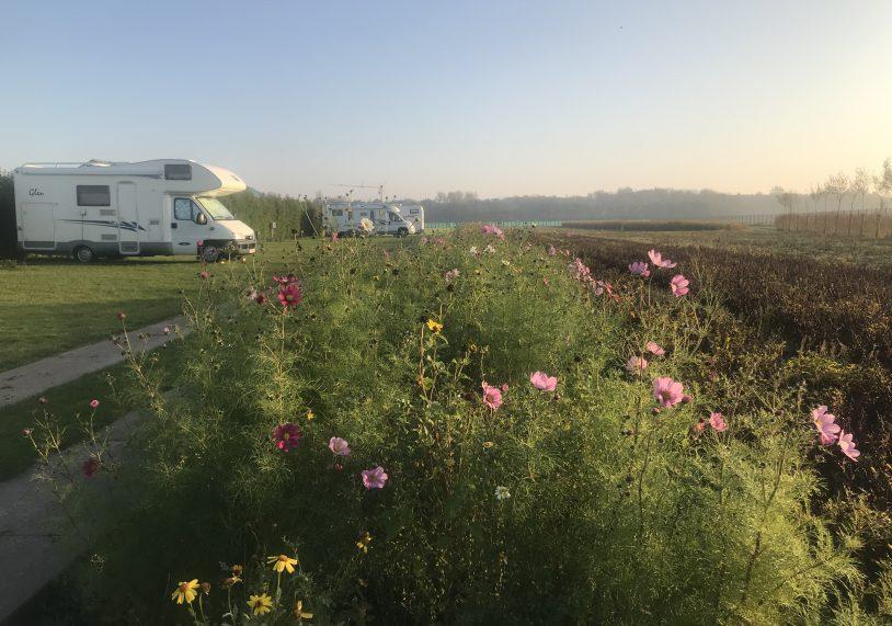 Camperplaats De Guldenroede