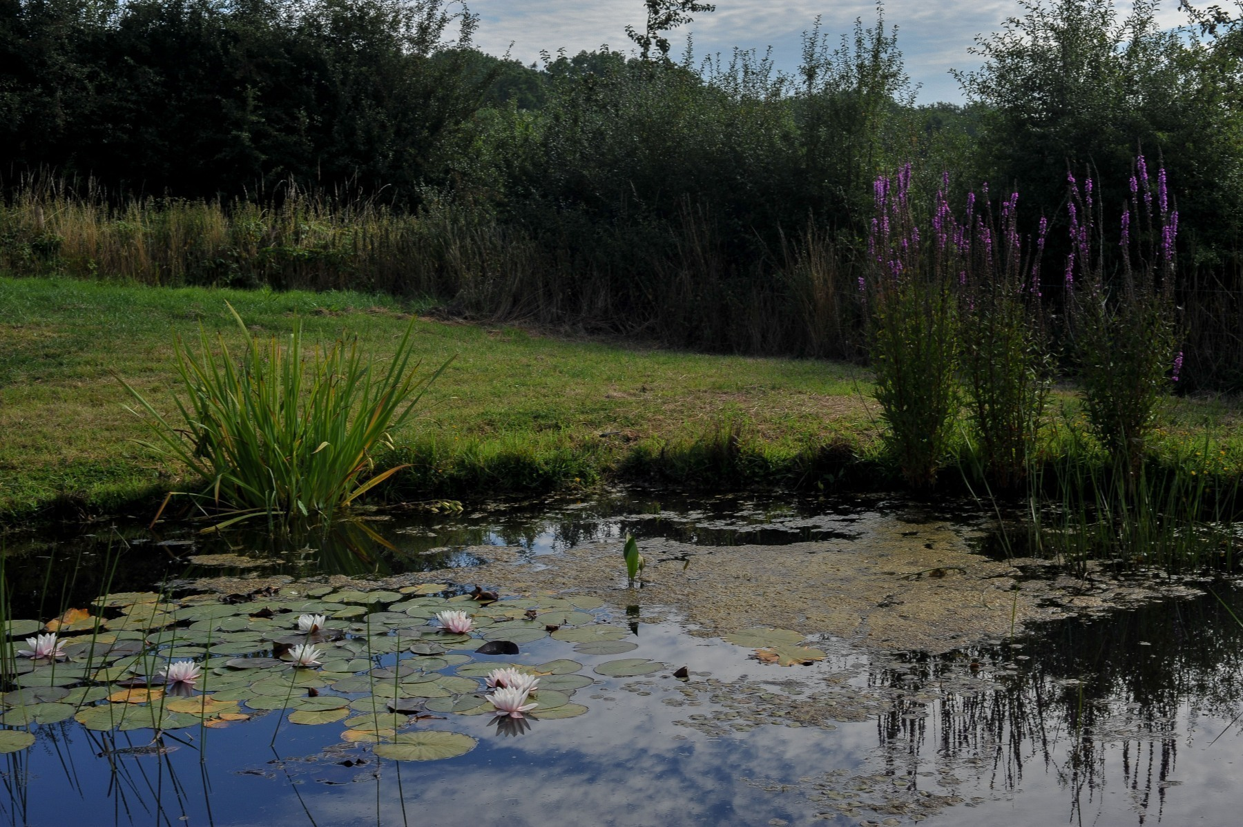 Site-pond-1