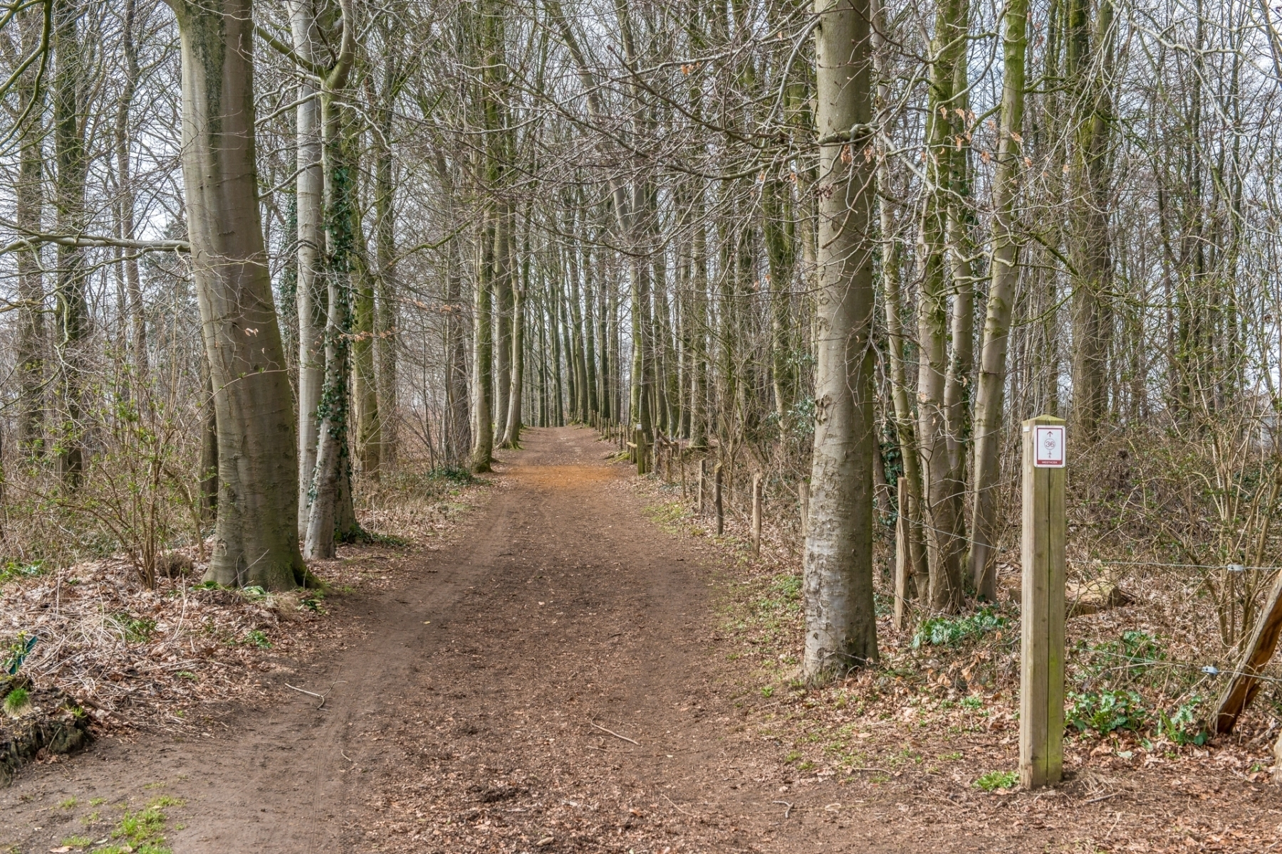 Région-balade-chemin forestier