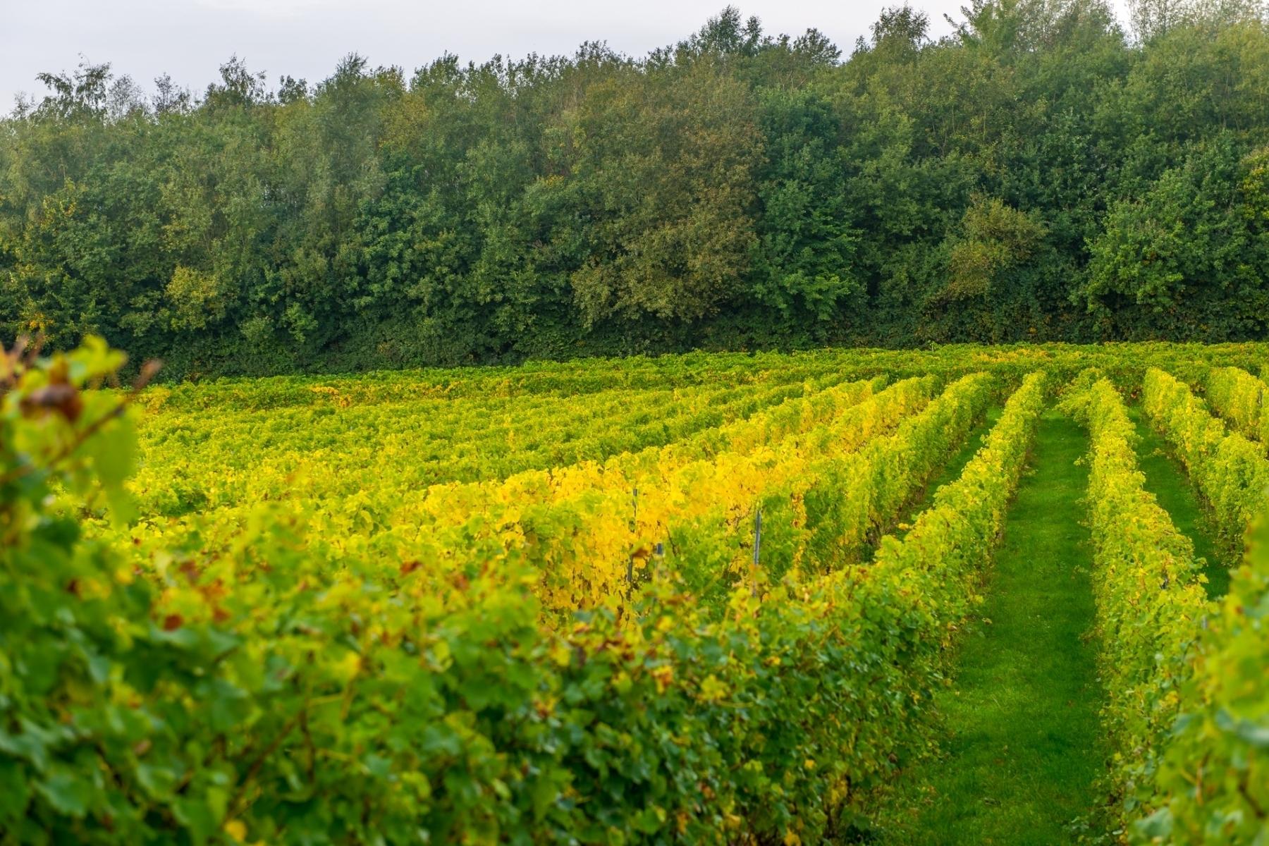 Region-Vineyard