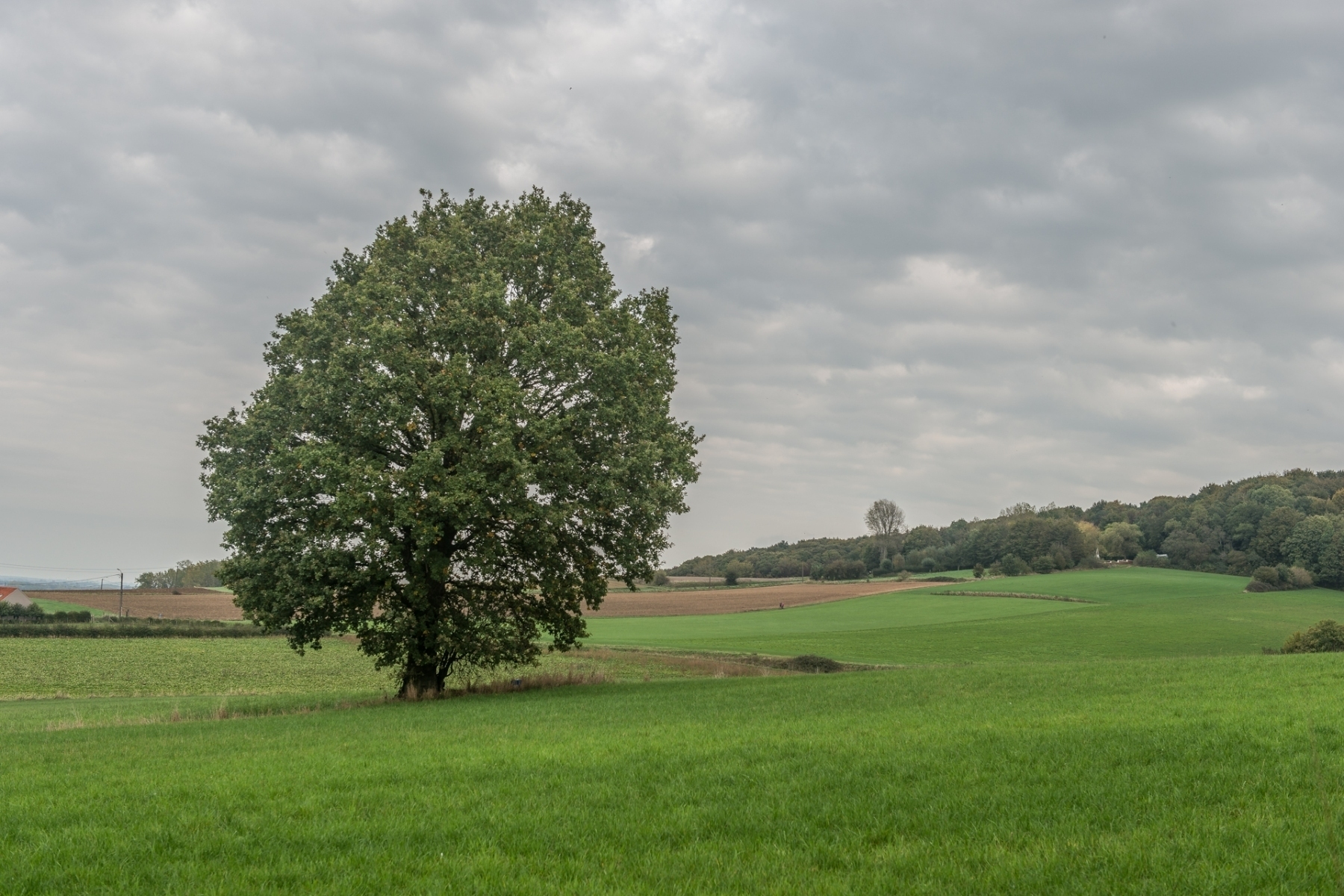 Region-solitary tree