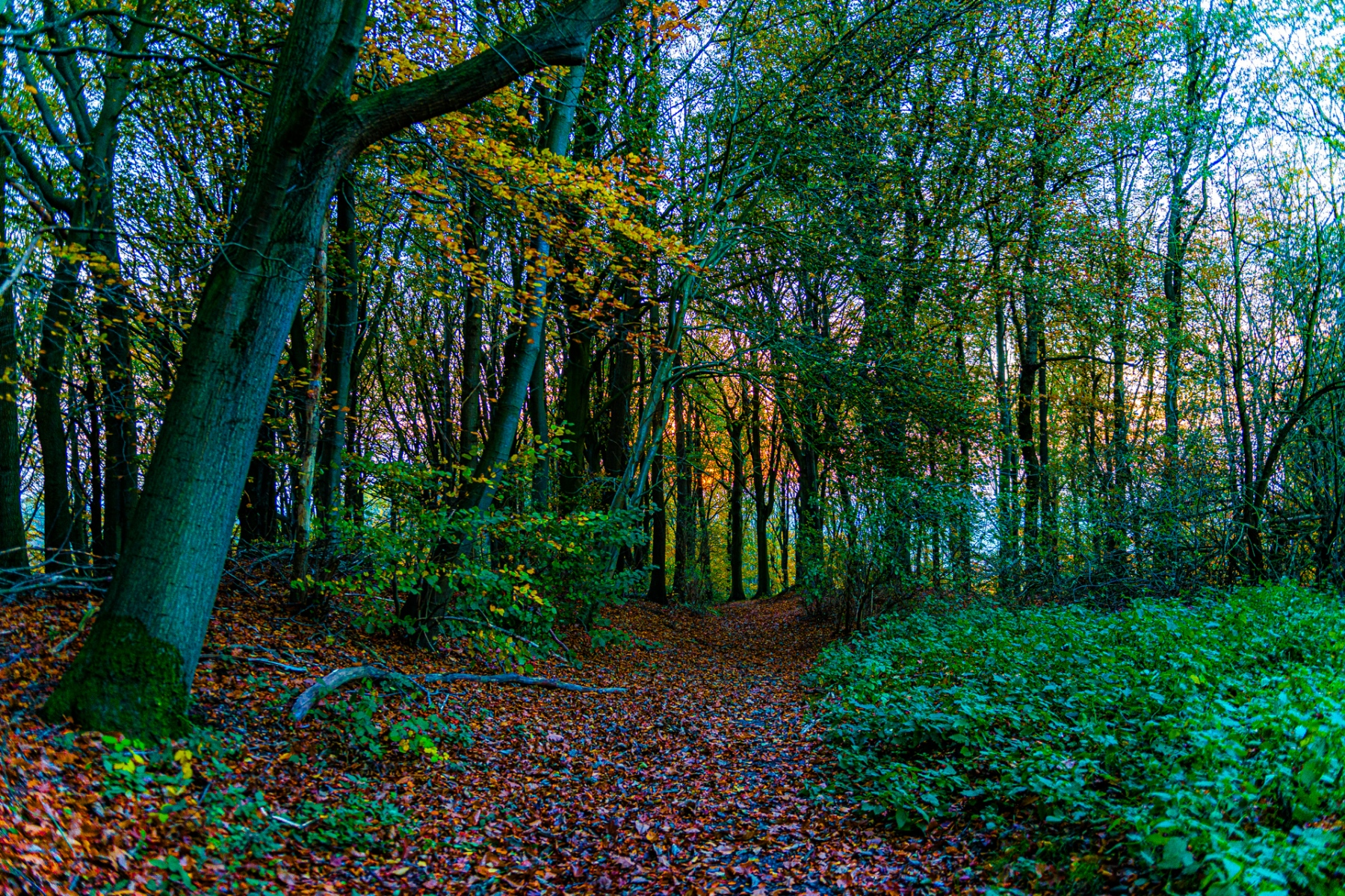Heuvelland-november-2020-113