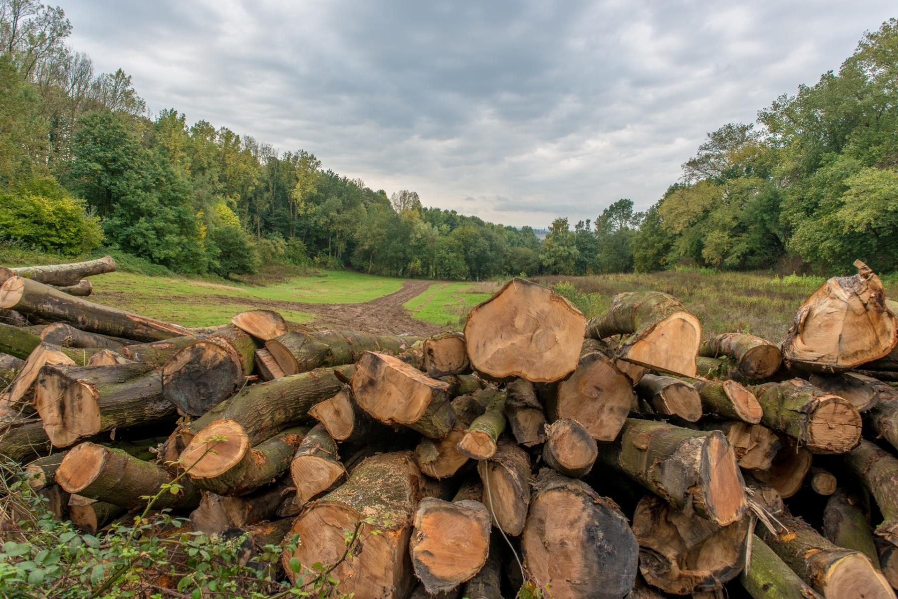 streek-houtkap