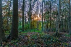 Heuvelland-november-2020-104