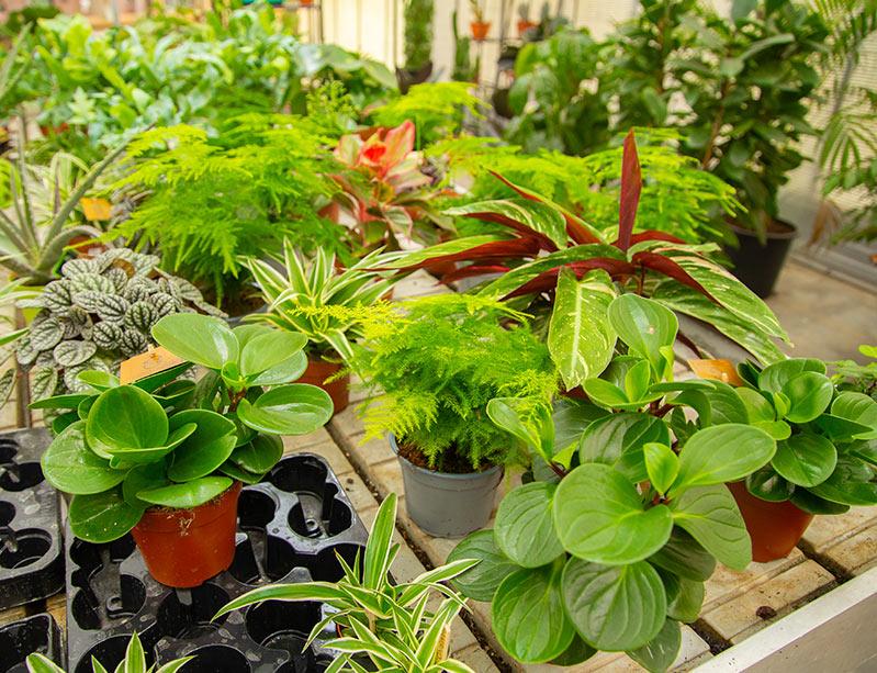 kamerplanten bij de knotwilg