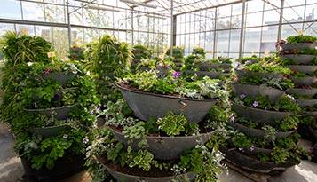 bloemenhotel bij De knotwilg