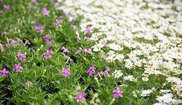 planten-en-bloemen bij De knotwilg