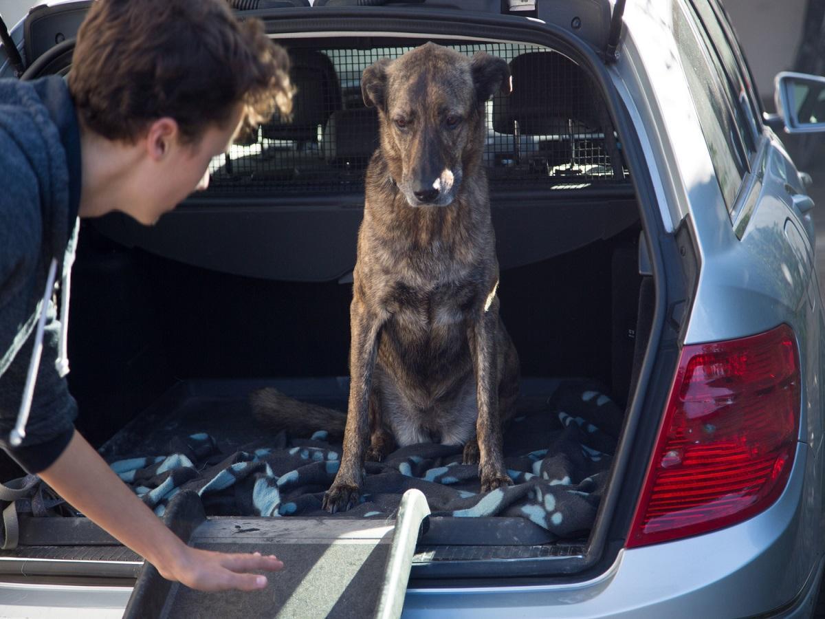 Arthrose beim Hund. Alter Hund Übung Autorampe