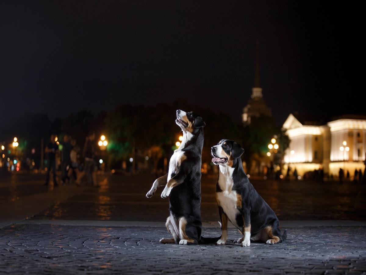 Zwei Hunde in der Stadt ohne Leine