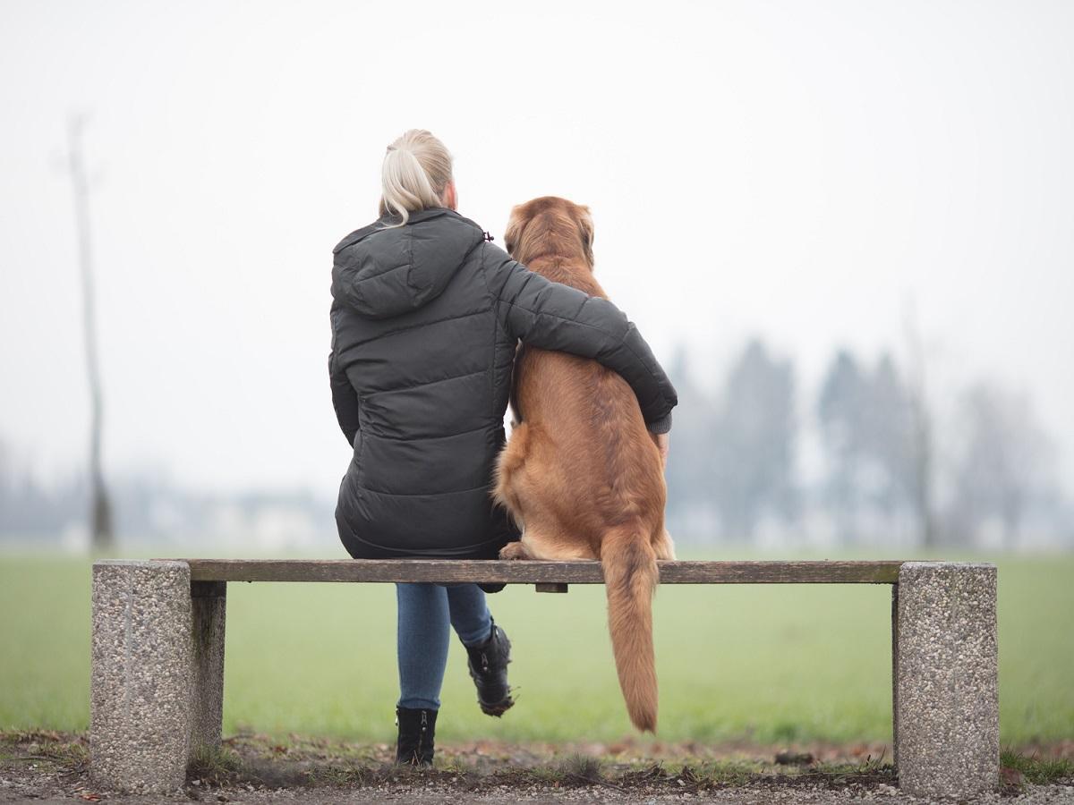 Osteochondrosis beim Hund. Schöner Hundebesitzer mit ihrem großen braunen Hund, auf einer Bank sitzend und in die Zukunft schauend