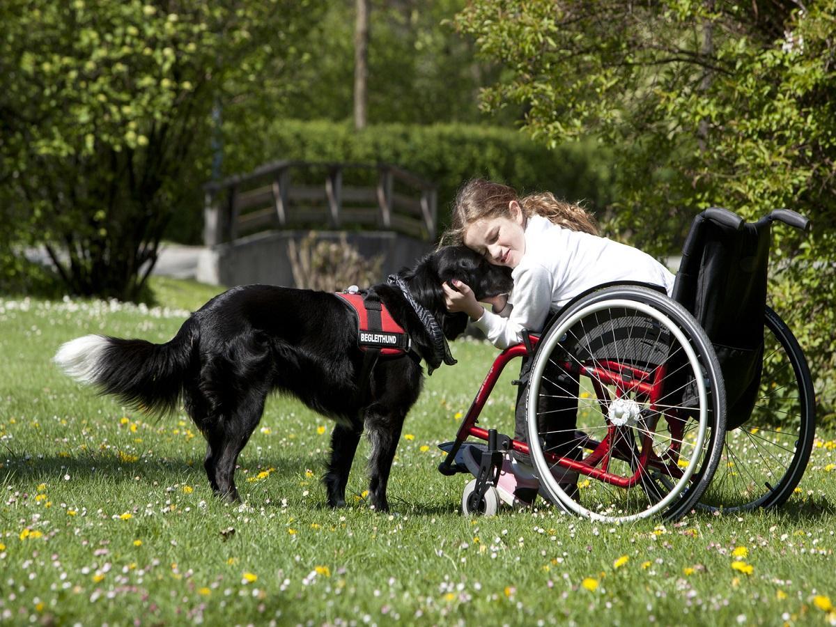Aufgaben von Assistenzhunden. Mädchen im Rollstuhl streichelt ihren Hund