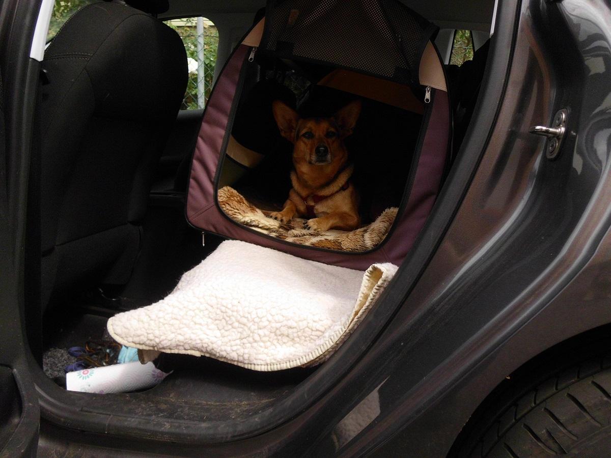 Auto fahren mit Hund. Hündin in einer Hundebox die in einem Auto auf der Rückbank liegt
