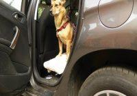Auto fahren mit Hund Beitragsbild. Hund im Auto mit Türe offen.