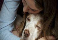 Babesiose beim Hund. Mädchen kuschelt mit Hund