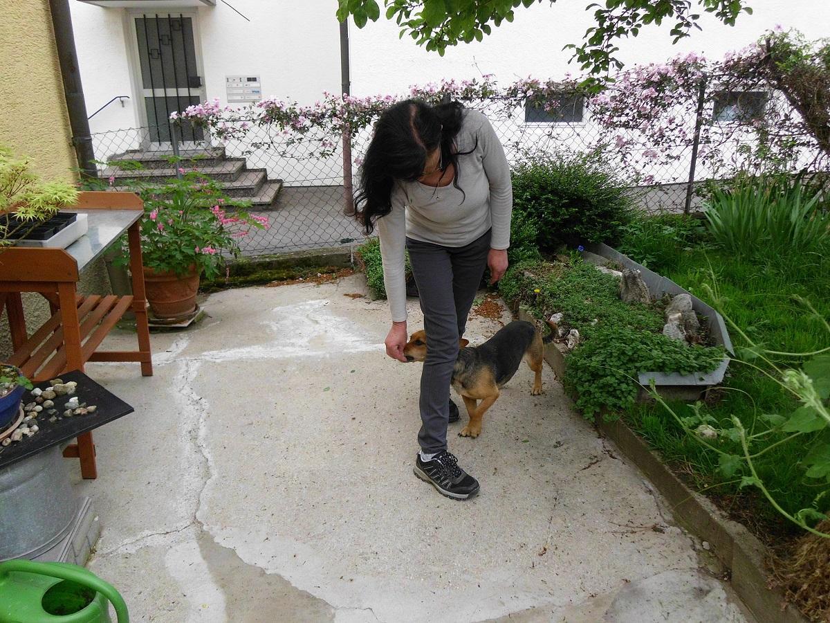 Hund und Frau beim üben von Beinslalom