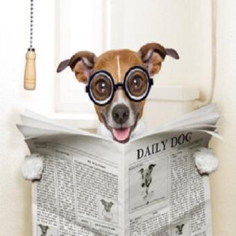 Durchfall beim Hund. Hund mit Zeitung auf Klo