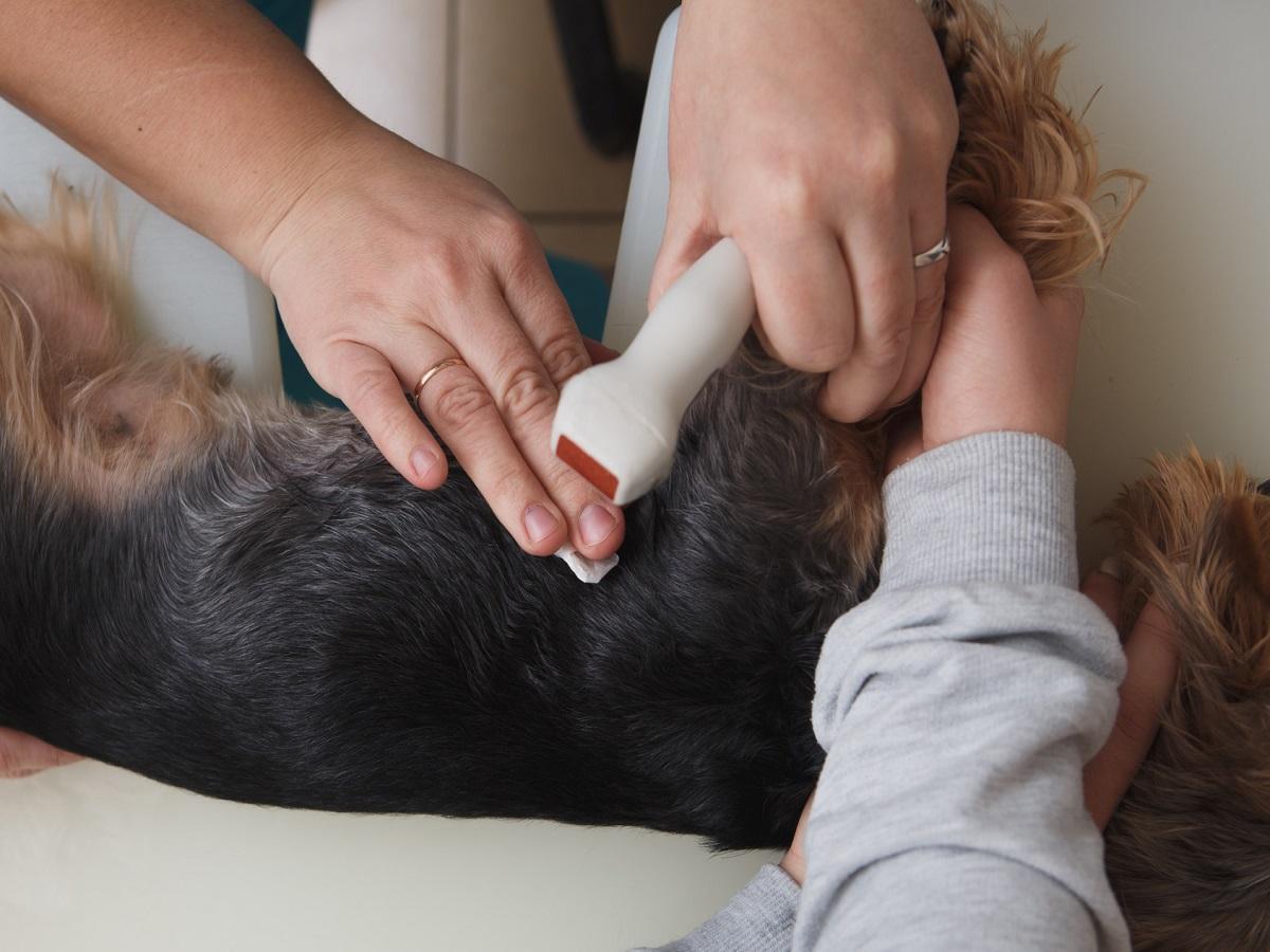 Epilepsie beim Hund. Hundetest in Tierklinik