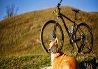 Fahrrad fahren mit Hund. Hund auf Wiese mit Fahrrad im Hintergrund