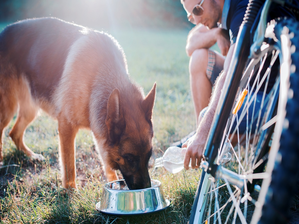 Fahrrad fahren mit Hund. Hund trinkt nach Radtour