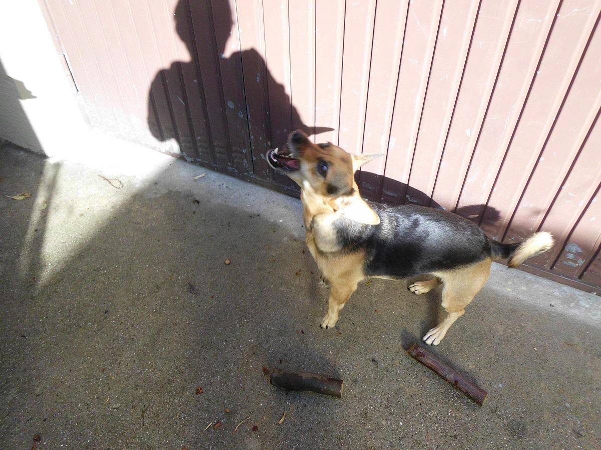 Fang das Hundeleckerli. Hund fängt Leckerlie aus der Luft
