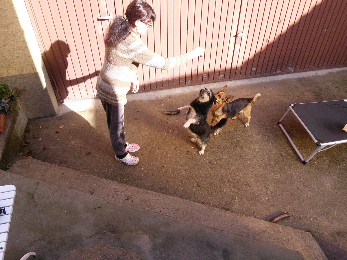 Fang das Hundeleckerli. Hund fängt Leckerlie auf den Hinterpfoten stehend