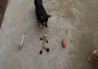 Finde das richtige Hundespielzeug. Hund entscheidet was für Spielzeug er bringen soll