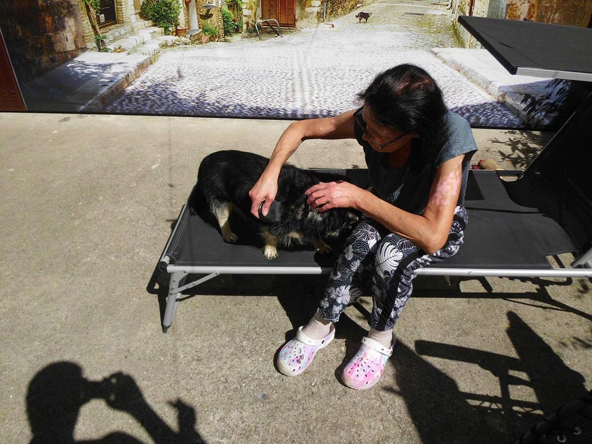 Flöhe beim Hund. Frau kontrolliert Flohbefall bei ihrem Hund