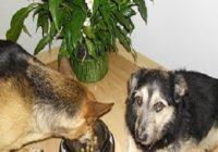 Futtermilben beim Hund mit Beschriftet. Hündin frisst aus Napf und Hund wartet