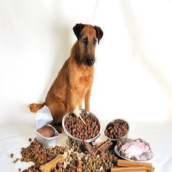 Futtermittel Allergie beim Hund. Hund vor viel Futter