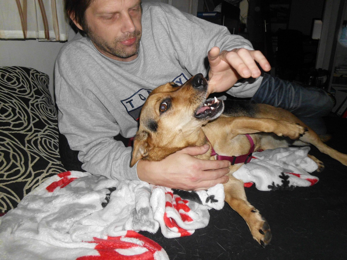 Gefahren beim Spielen mit dem Hund. Mann und Hündin toben im Wohnzimmer