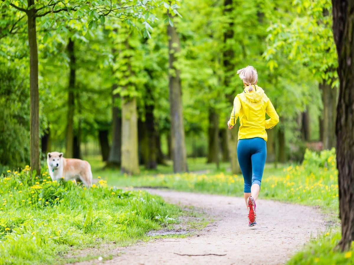 Geländelauf mit Hund. Frauenläufer, der mit Hund im Park, Sommernatur, draußen trainierend im hellen Wald läuft