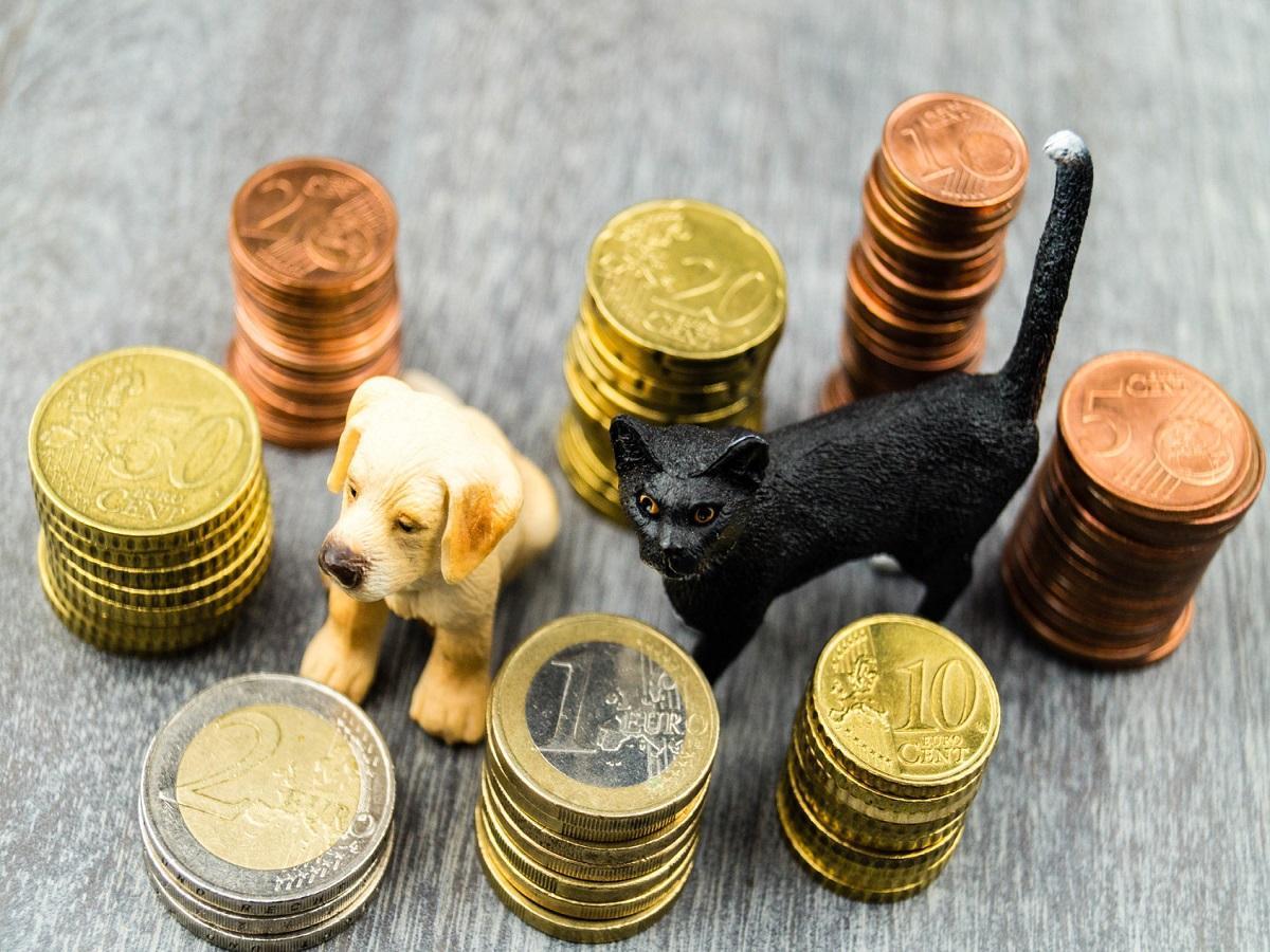 Geschichte der Hundesteuer. Haustierkosten