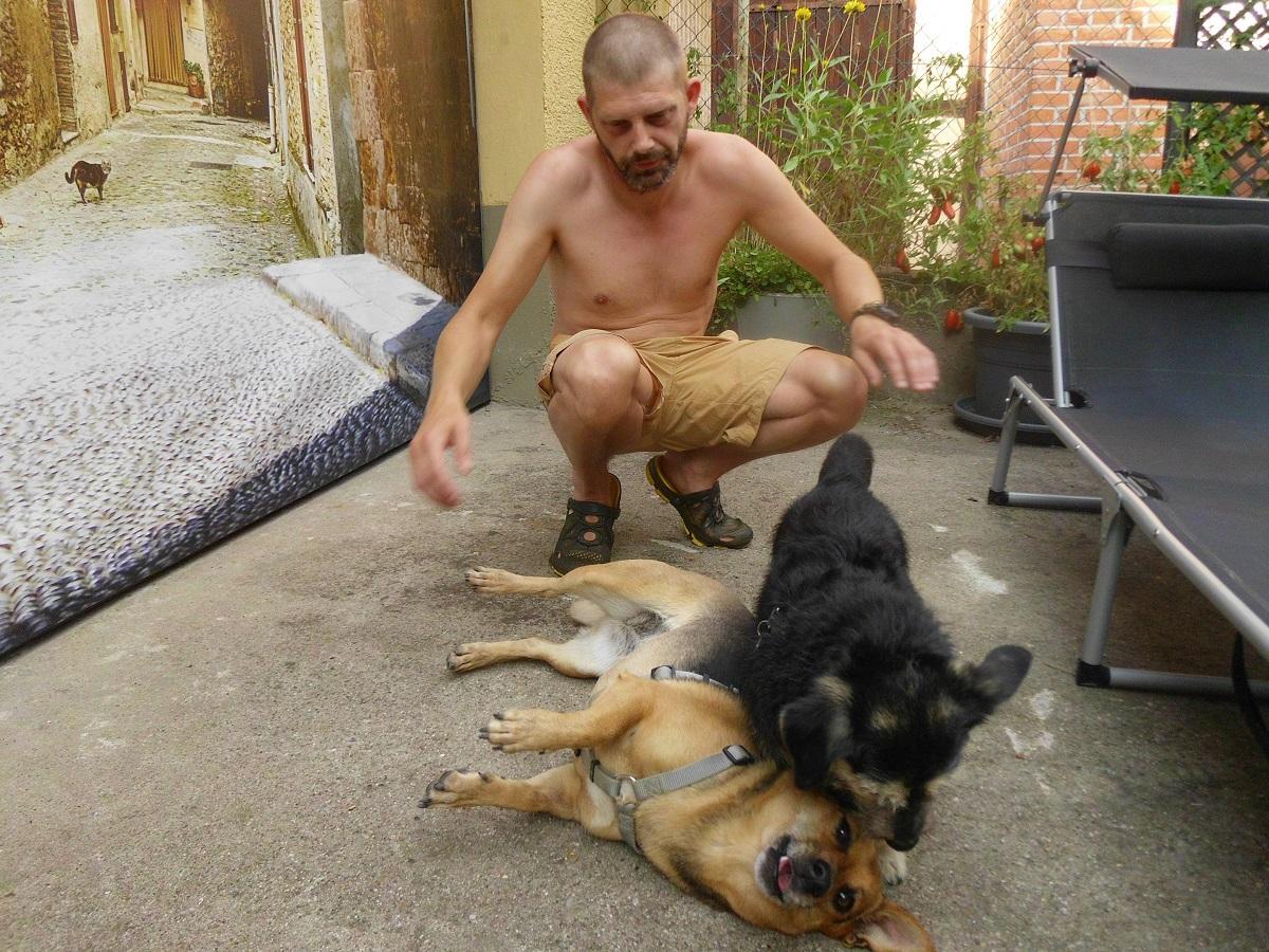 Giardien beim Hund. Zwei Hunde spielen mit einander