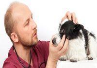 Grüner Star beim Hund. Arzt untersucht Augen von Hund