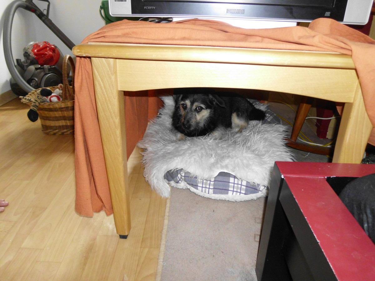 Hundehöhle bauen. Hund hat Angst in seiner Höhle