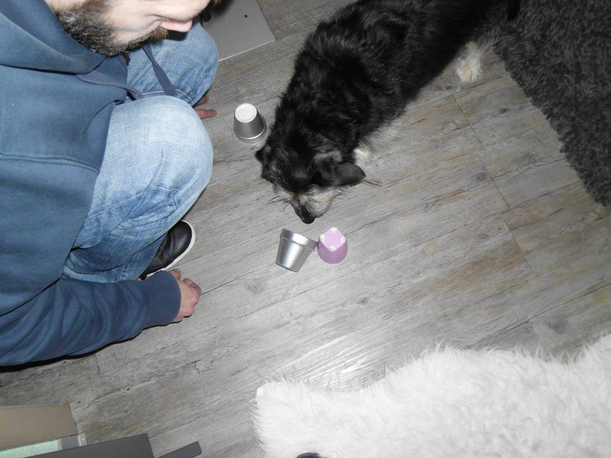 Mann spielt Hütchenspiel für Hunde mit seinem Hund