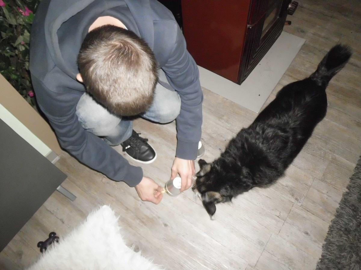 Hütchenspiel für Hunde. Mann versteckt Leckerli unter Becher