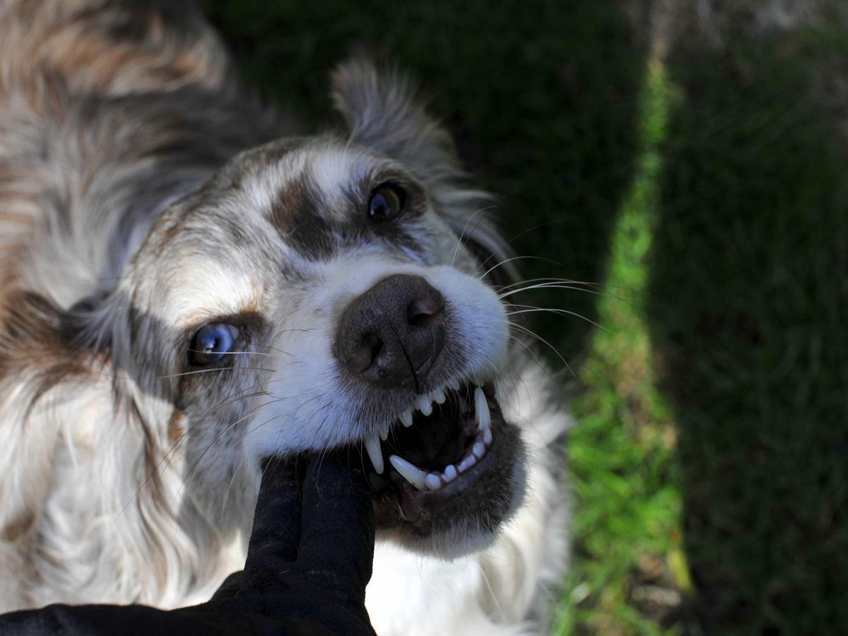 Haftpflichtversicherung für Hund. Wütender Hund, der in die Finger beißt