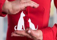 Haftpflichtversicherung für Hund. Versicherer, der Haustiere mit seinen Händen schützt