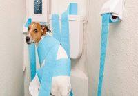 Harnleiterektopie beim Hund. Hund sitzt auf geschlossener Klobrille