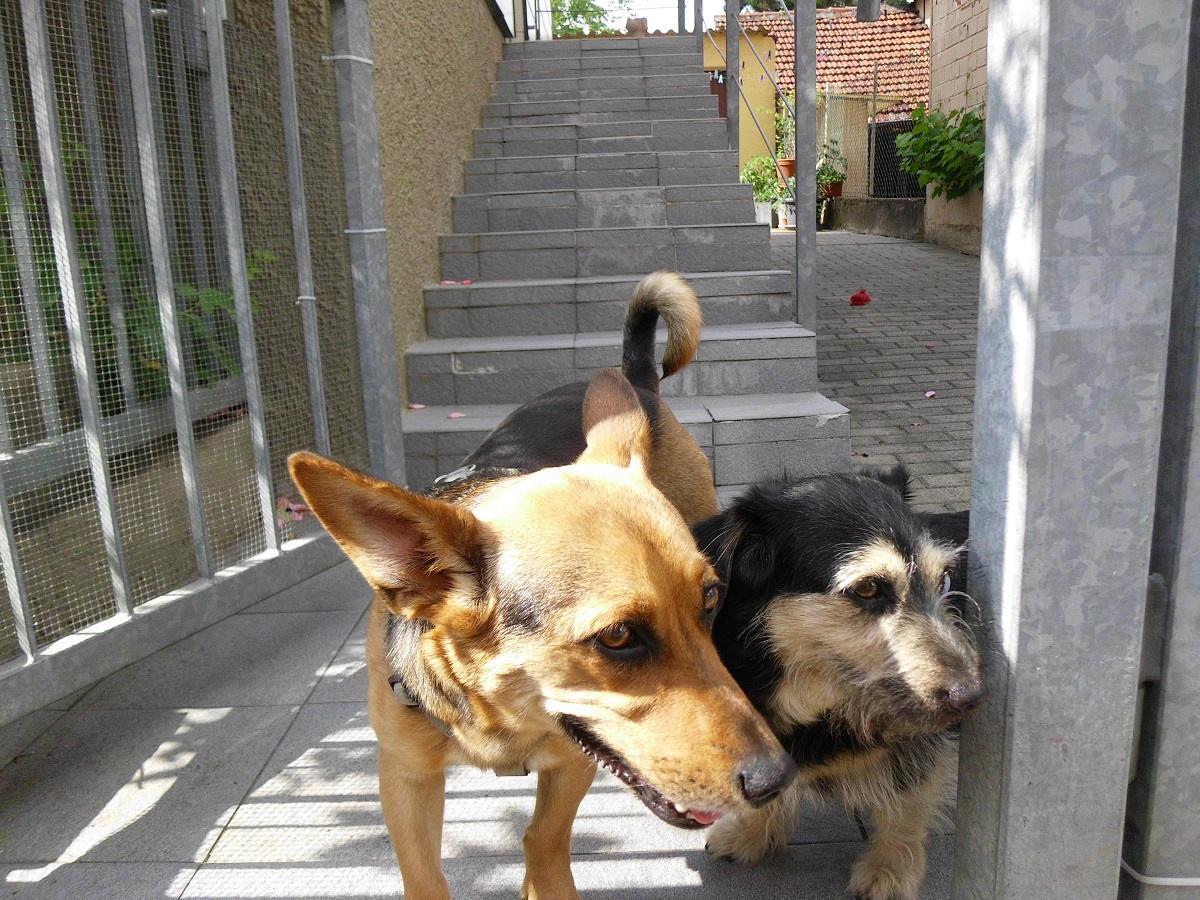Hinter dem Zaun. Zwei Hunde schauen zum Tor heraus